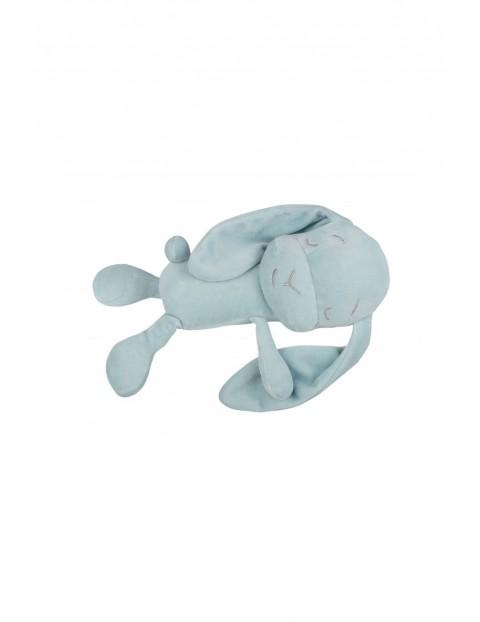 Lawendowy Śpioch - królik Effiki niebieski