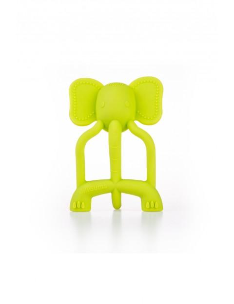 Silikonowy gryzak  słonik - limonkowy GiliGums