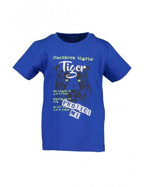 Koszulka chłopięca niebieska z tygrysem
