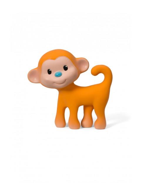 Gryzak - małpka piszczałka 5O31A8
