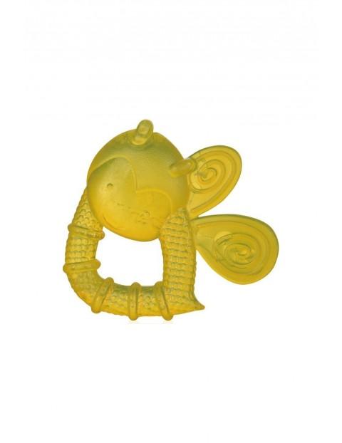 Wodny gryzaczek Pszczółka